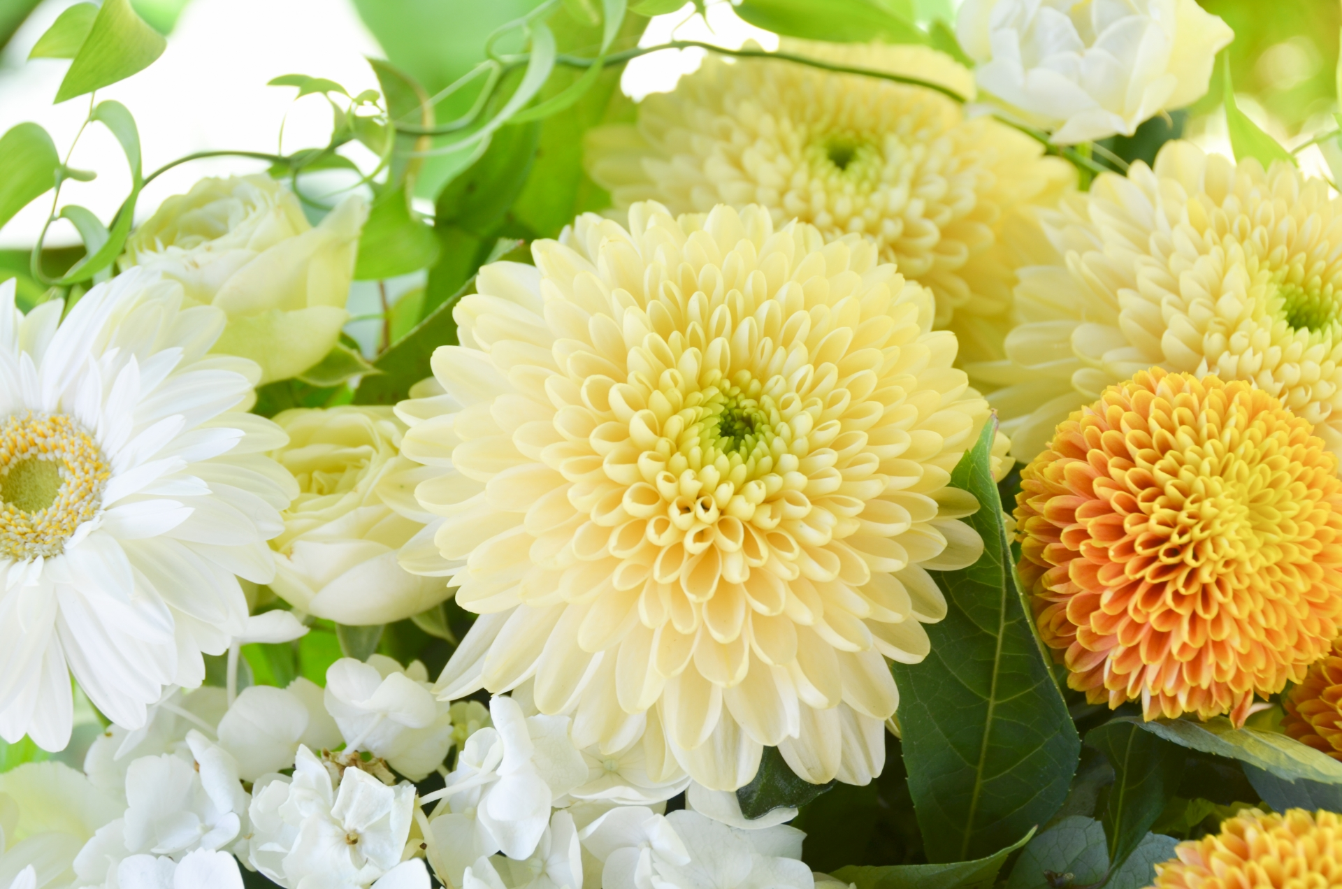 1日1家族限定家族葬専用斎場、ファミリーホール高津の心温まるおもてなし